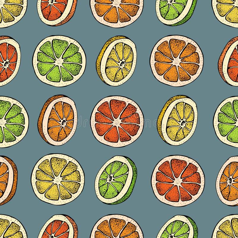 Vector seamless pattern with hand drawn citrus fruit, slices pieces sketch. Mandarin orange, tangerine, lime, lemon. Grapefruit. Detailed vegetarian food royalty free illustration