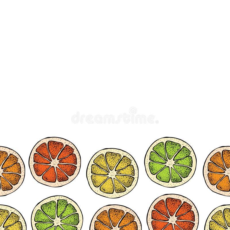 Vector seamless pattern with hand drawn citrus fruit, slices pieces sketch. Mandarin orange, tangerine, lime, lemon. Grapefruit isolated on white. Detailed stock illustration