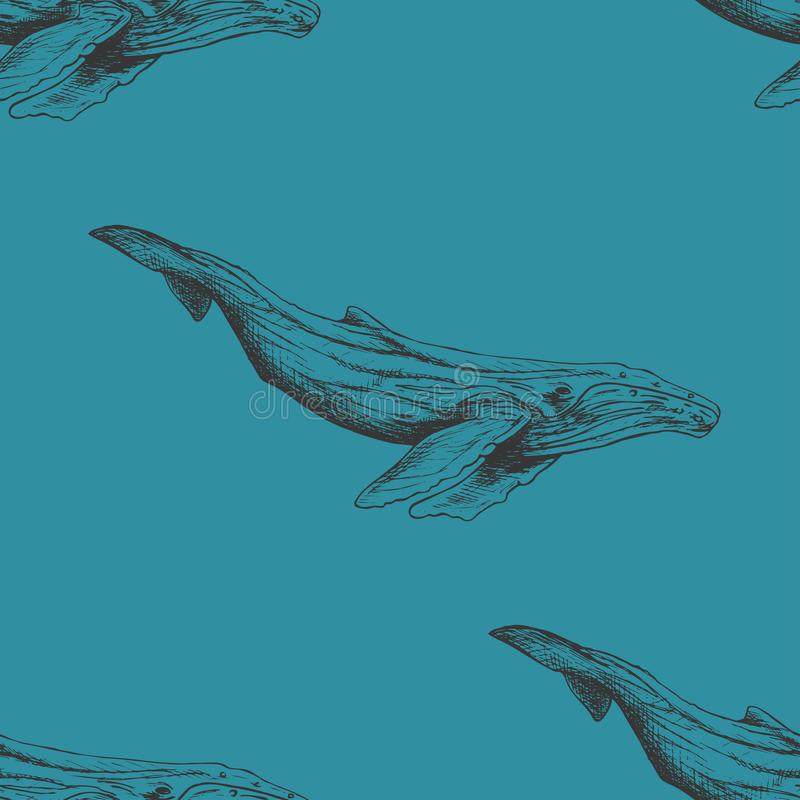 Vector seamless pattern with hand drawn humpback whales sketch. Vintage background. Sealife illustration royalty free illustration