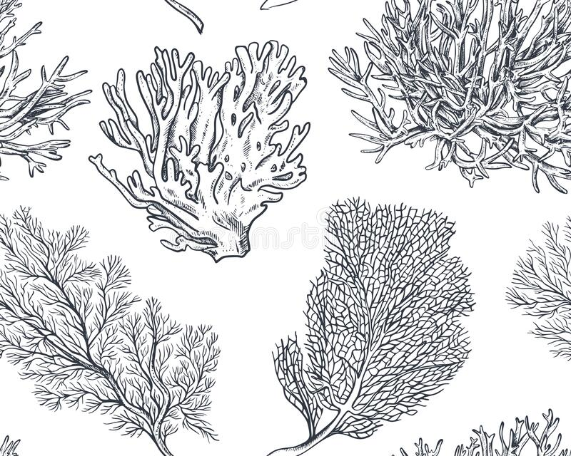 Vector seamless pattern with hand drawn ocean plants and coral reef elements in sketch style. stock photos