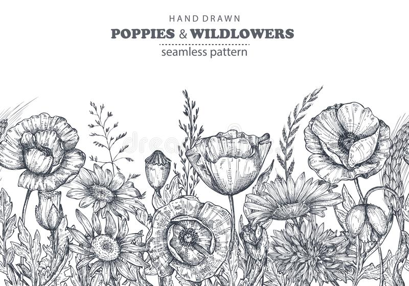 Vector seamless pattern with hand drawn poppy and other flowers and plants. On white background royalty free illustration