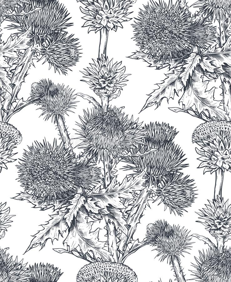 Vector seamless pattern with hand drawn Thistle or Carduus plant, leaf, bud and flower. vector illustration