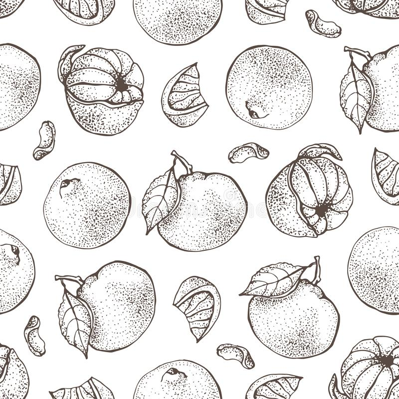 Vector seamless pattern with ink hand drawn citrus fruit, slices and leaves sketch. Mandarin orange, tangerine, lime. Isolated on white background. Detailed royalty free illustration