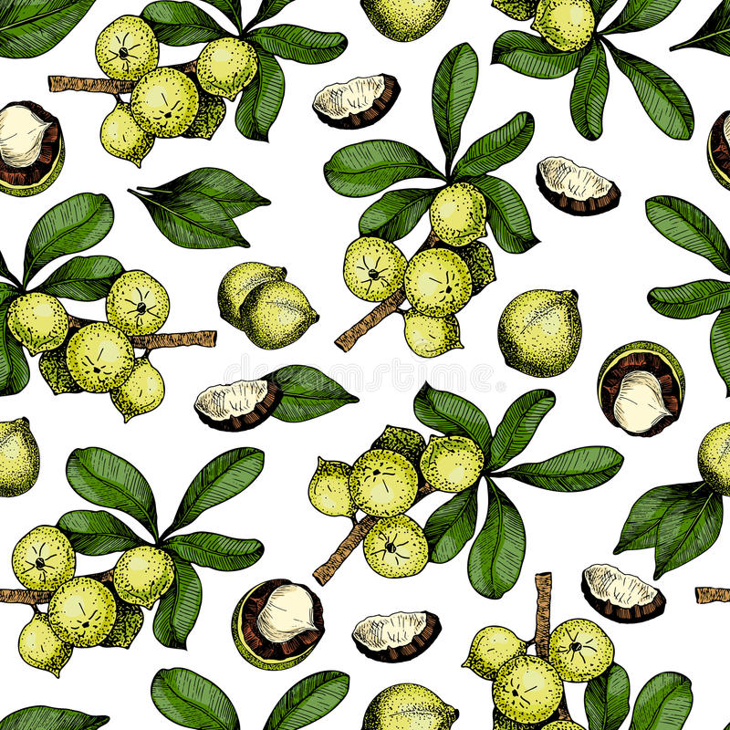 Vector seamless pattern of macadamia nuts and branches. Hand drawn colored engraved art. royalty free illustration
