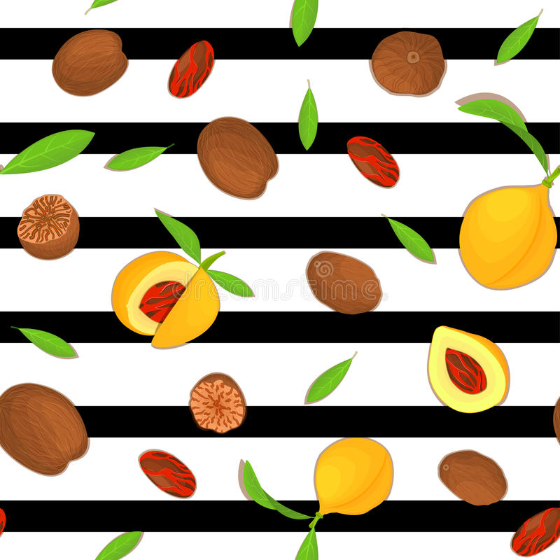 Vector seamless pattern Nutmeg spice fruit. Striped background with nuts in the shell, whole, shelled, leaves vector illustration