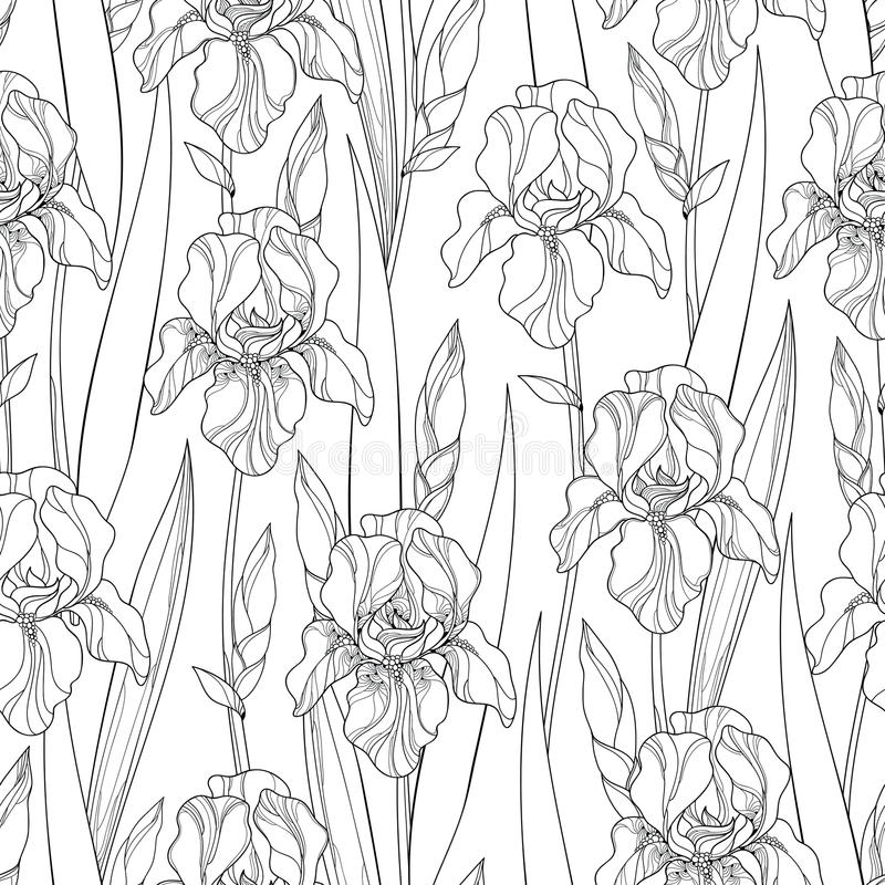Vector seamless pattern with outline Iris flowers, bud and leaves in black on the white background. Ornate floral background vector illustration