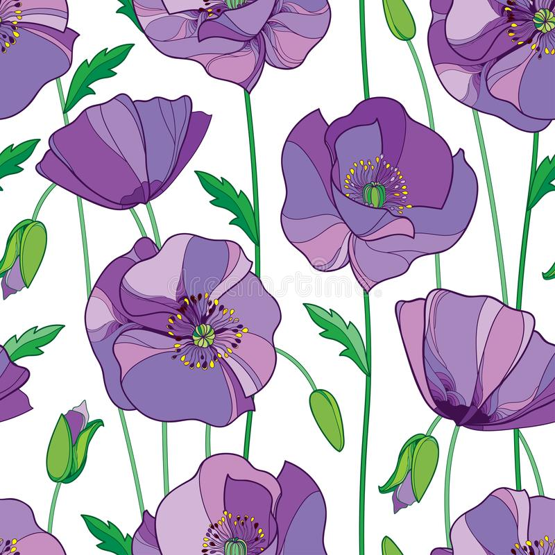 Vector seamless pattern with outline lilac Poppy flower, bud and green leaves on the white background. Elegance floral background. Vector seamless pattern with vector illustration