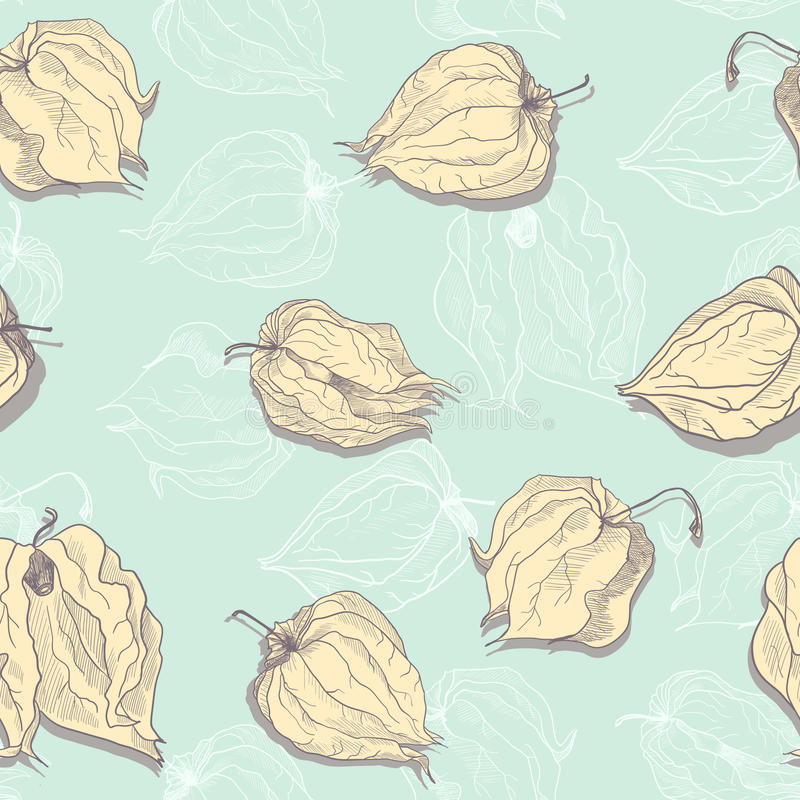 Vector seamless pattern of physalis royalty free illustration