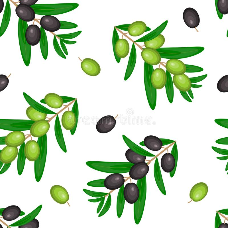 Vector seamless pattern with ripe black and green olives on whit royalty free illustration