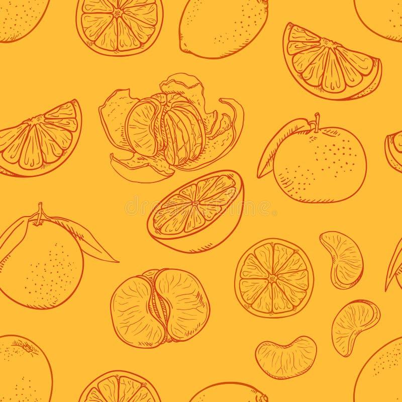 Vector Seamless Pattern of Sketch Citrus Fruit on Orange Background royalty free illustration