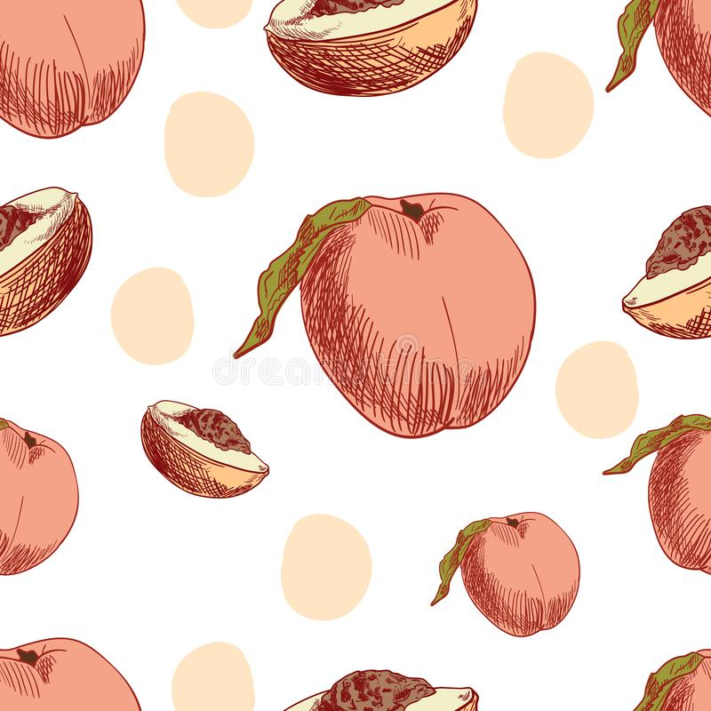 peach fruits stock illustrations 9 436 peach fruits stock illustrations vectors clipart dreamstime peach fruits stock illustrations 9