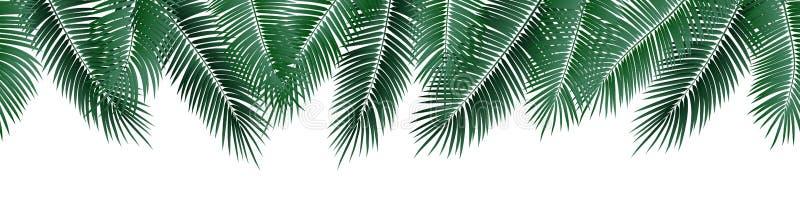 Vector seamless summer palm leaves on white background. stock illustration