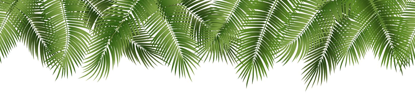 Vector seamless summer palm leaves on white background. Vector seamless summer palm leaves on white background