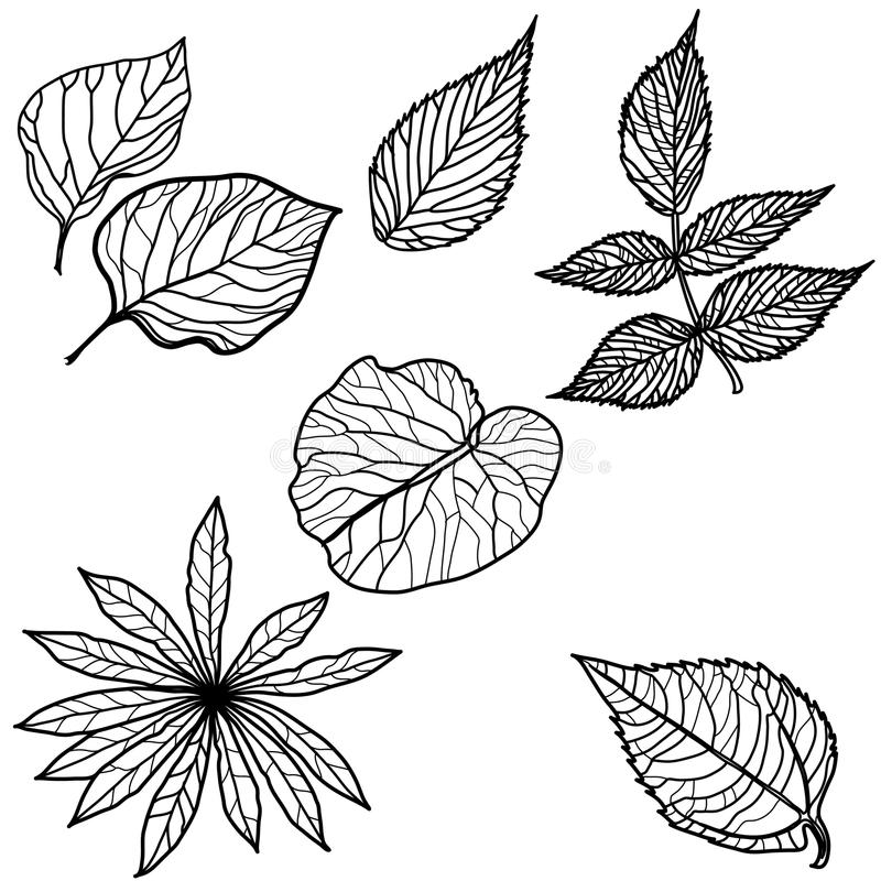 Download Vector set of autumn leafs stock vector. Image of fall - 20589519