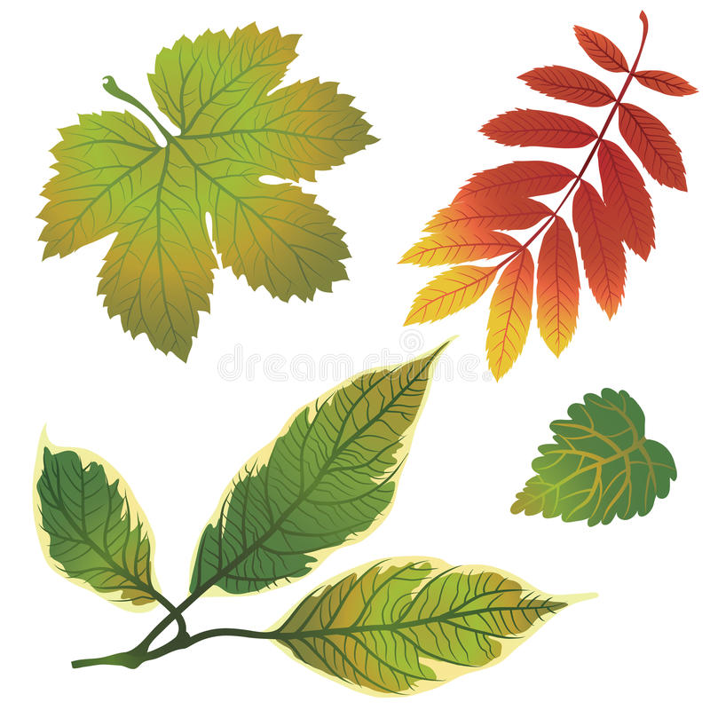 Download Vector Set Of Autumn Leafs Stock Photo - Image: 20669520