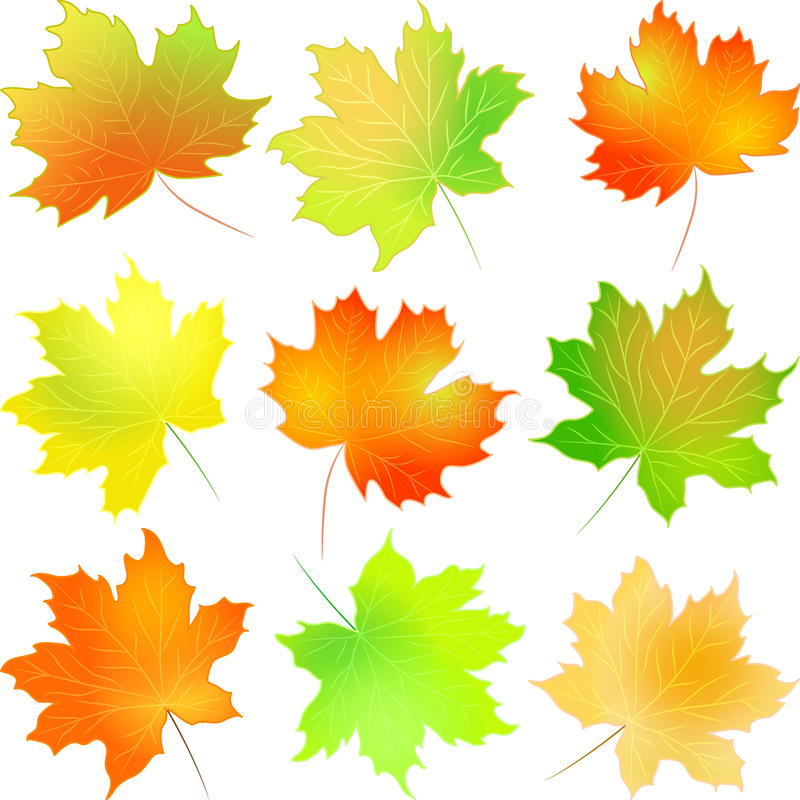 Vector set autumn maple leaf