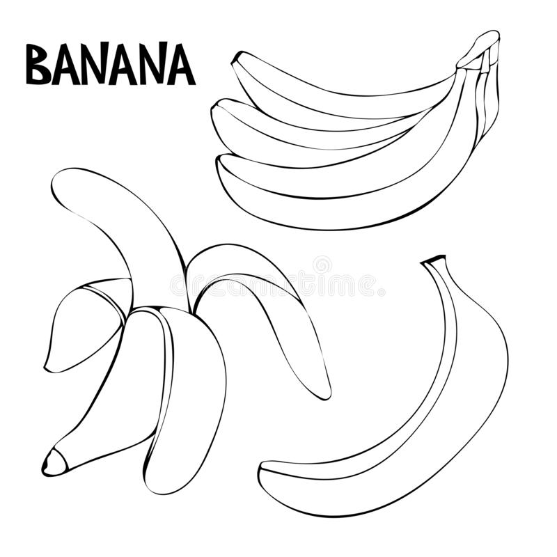 Vector set with bananas: bunch of bananas, unpeeled banana, peeled banana. vector illustration