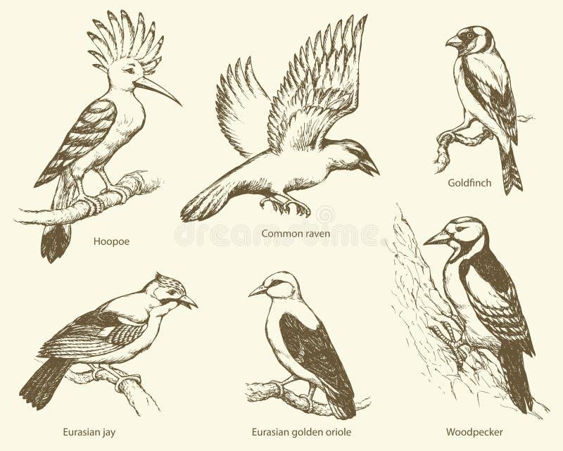 Vector set of birds: crow, hoopoe, oriole, woodpecker, jay, gold royalty free illustration
