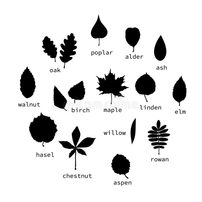 Vector set of black leaves silhouettes with text royalty free illustration