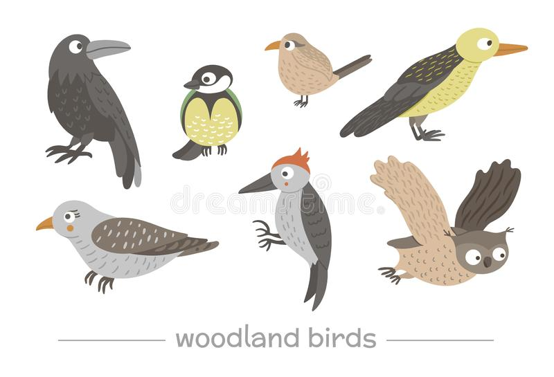 Vector set of cartoon style hand drawn flat funny cuckoos, woodpeckers, owls, raven, wren. Cute illustration of woodland birds for royalty free illustration