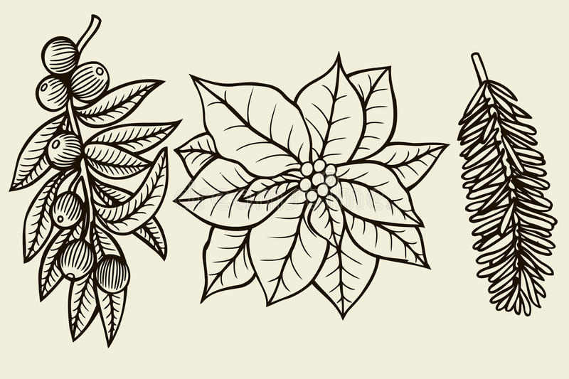 Vector set with Christmas plants. Botanical illustration. Branch of holly, spruce, pine, Christmas flower. Design elements isolated on beige background vector illustration