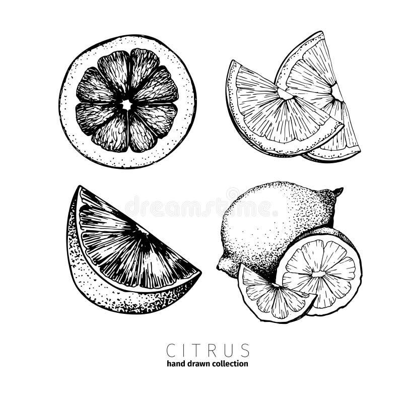 Vector set of citrus fruits. Orange, lemon, lime and bloody orange slices. royalty free illustration