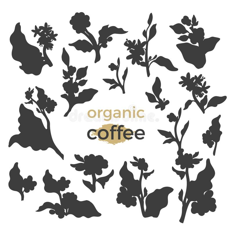 Vector set of coffee tree branches royalty free illustration