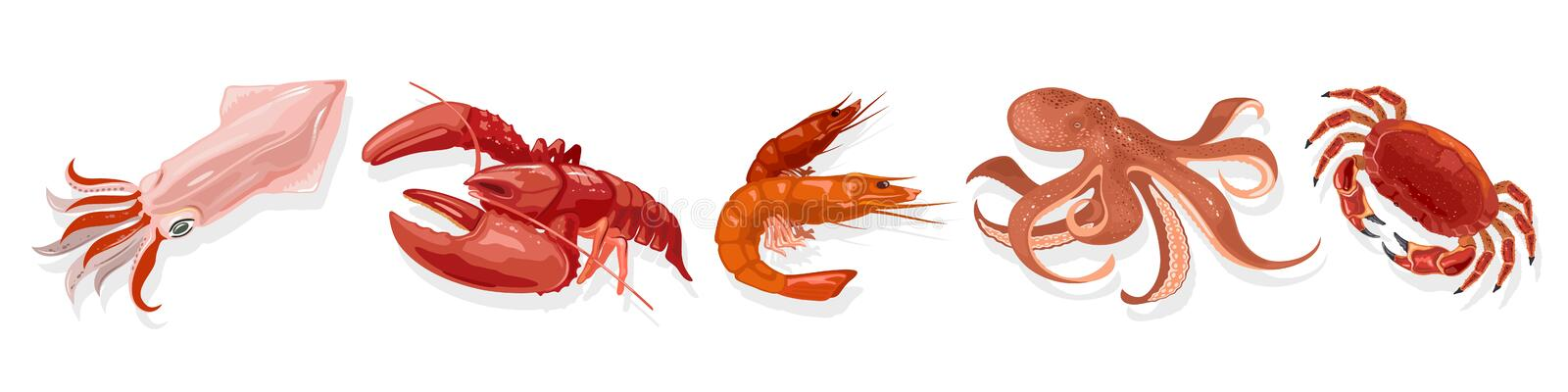 Vector set with cooked marine animals, products squid, lobster, shrimp, octopus, crab. royalty free illustration