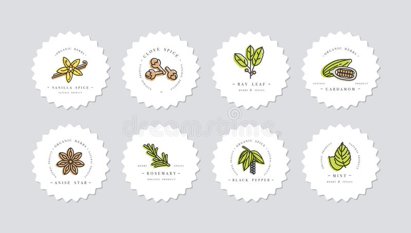 Vector set design colorful templates logo and emblems - herbs and spices. Different spices icon. Logos in trendy linear vector illustration