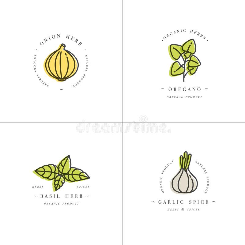 Vector set design colorful templates logo and emblems - herbs and spices. Italian herb icon. Logos in trendy linear. Style isolated on white background vector illustration
