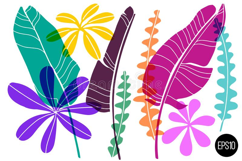 Vector set of drawn tropical leaves, colorful artistic botanical illustration, isolated floral elements, hand drawn. Illustration vector illustration