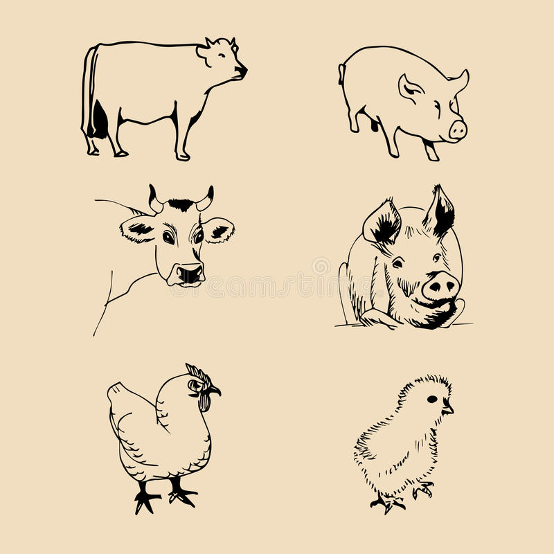 Vector set of farm animals hand sketched illustrations with pig, cow and chicken for meat products logo. Eco food sign. stock illustration