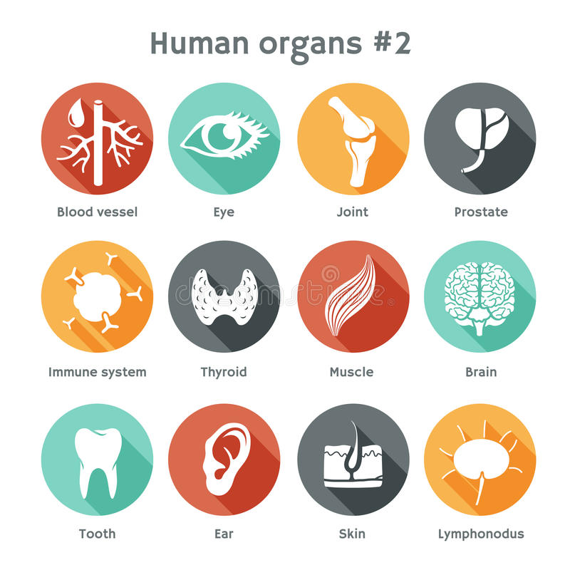 Vector set of flat icons with human organs. Vector round icons of human organs Flat design vector illustration