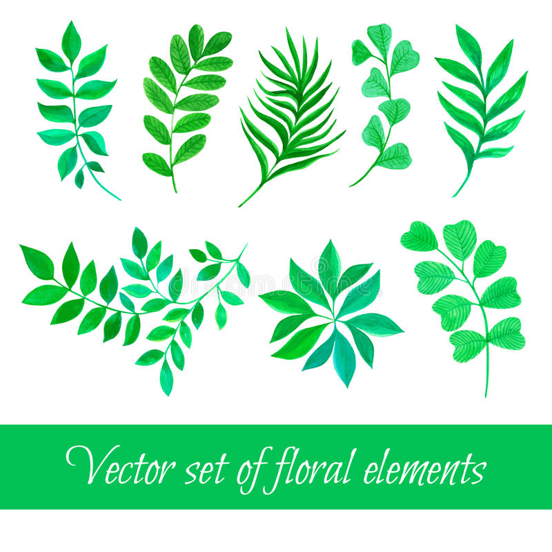 Vector set of floral collection with leaves drawing watercolor royalty free stock photography