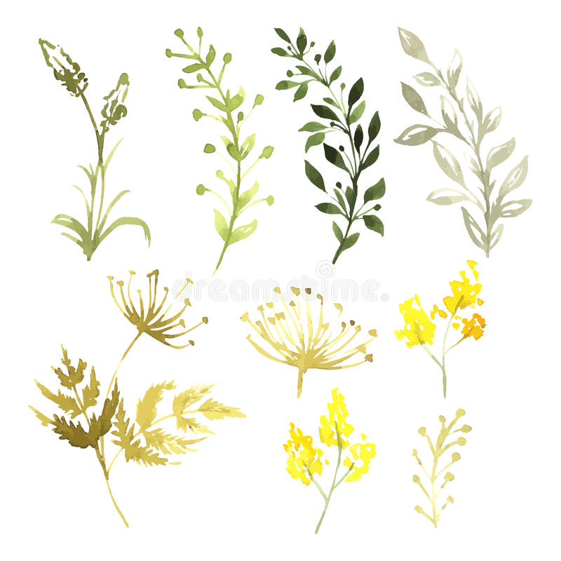 Vector Set of flowers painted in watercolor on stock illustration