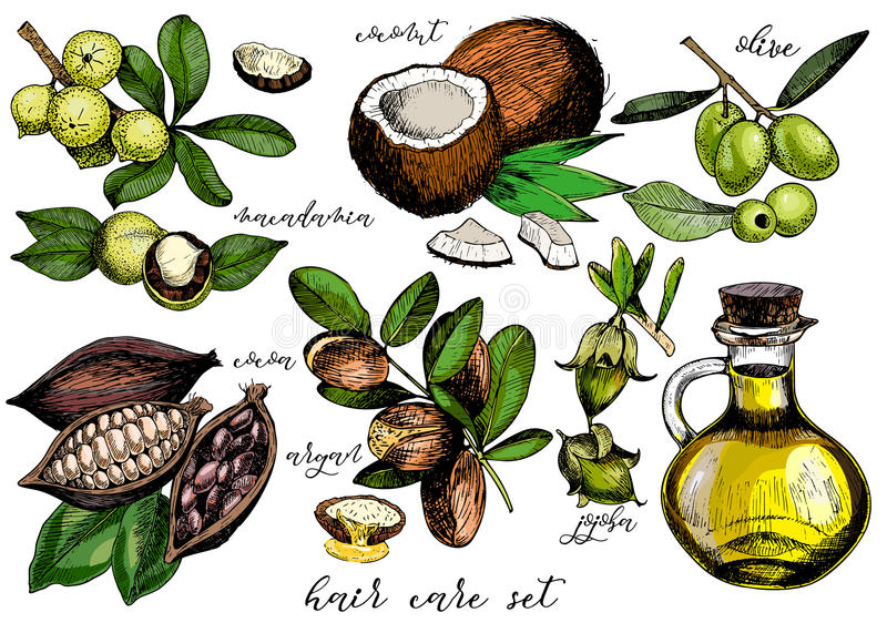 Vector set of hair care ingredients. Olive, argan, coconut, cocoa, macadamia, jojoba and oil bottle. Vector set of hair care ingredients. Organic hand drawn vector illustration