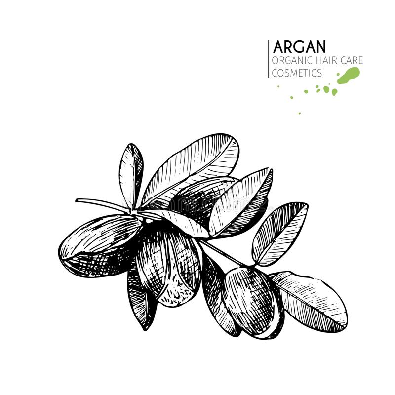 Vector set of hair care ingredients. Organic hand drawn elements. Argan nuts branch. Use for cosmetic package, shop, store, products, spa salon, wellnes stock illustration