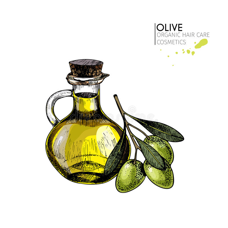 Vector set of hair care ingredients. Organic hand drawn elements. Farm market vegetables. Colored green olive branch vector illustration