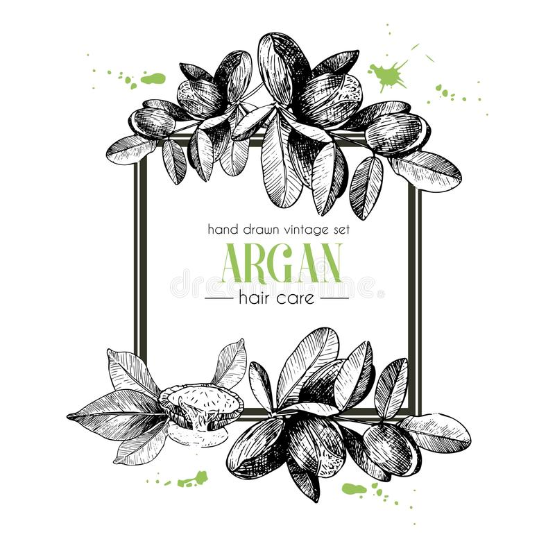 Vector set of hair care ingredients. Organic hand drawn elements. Square border composition. stock illustration