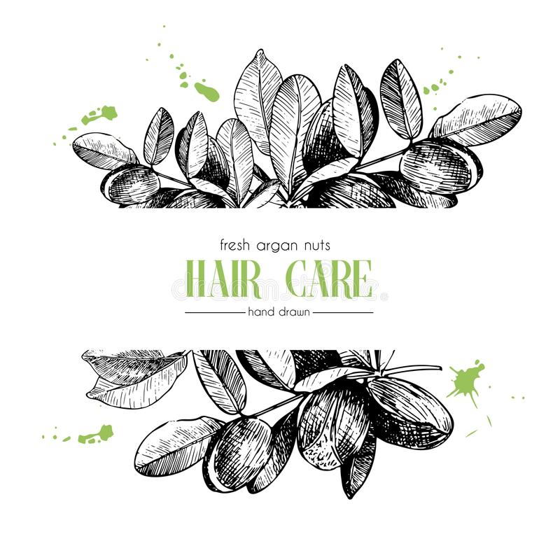 Vector set of hair care ingredients. Organic hand drawn elements. Template for Argan branch. Use for cosmetic package, shop, store, products, spa salon vector illustration