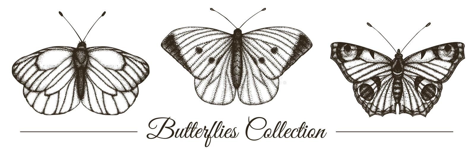 Vector set of hand drawn black and white butterflies. Engraving retro illustration. Realistic insects isolated on white background. Detailed graphic drawing in vector illustration