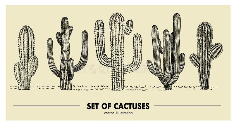 Vector set of hand drawn cactus. Sketch illustration. Different cactuses in monochrome style.  stock illustration