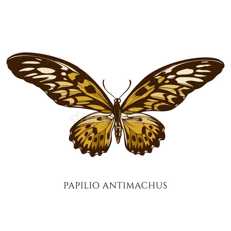 Vector set of hand drawn colored papilio antimachus royalty free illustration