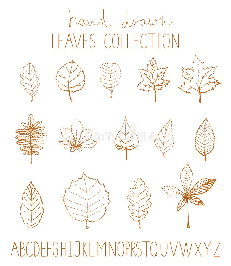 Vector set of hand drawn leaves royalty free illustration