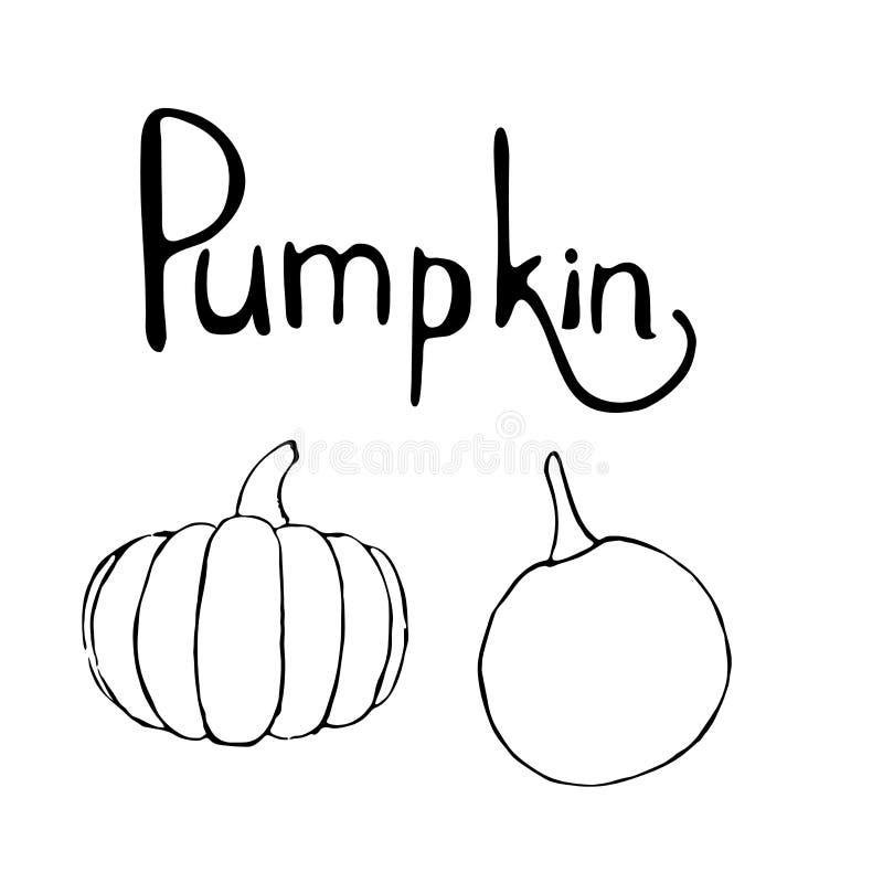 Vector set of hand drawn outline pumpkins and pumpkin text stock illustration