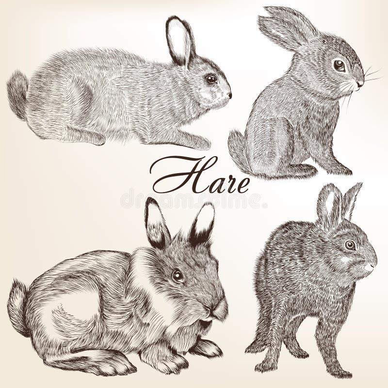 Vector set of hand drawn rabbits stock illustration