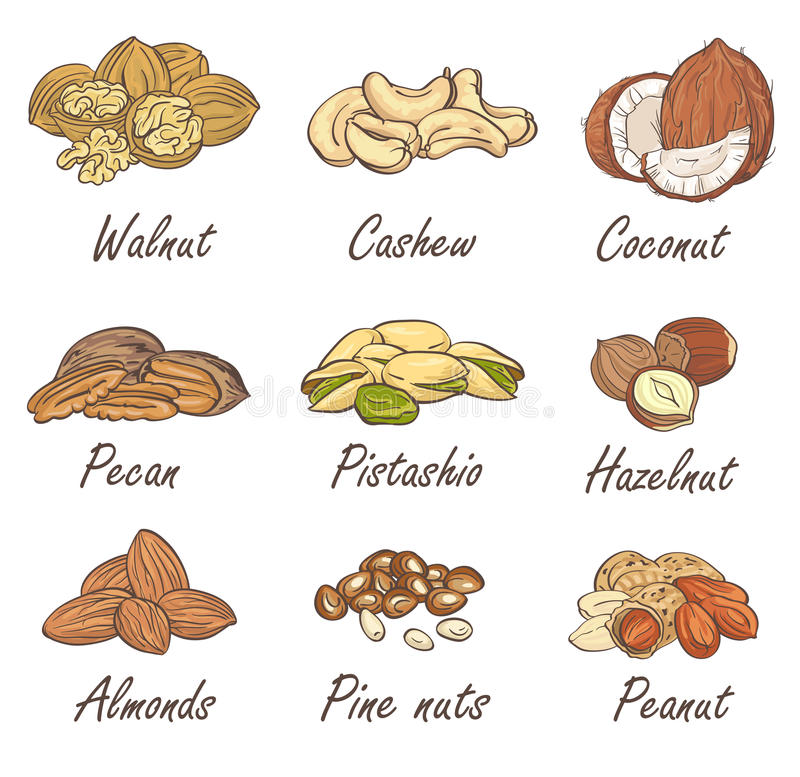 Vector set of hand sketched nuts on white background in hand drawn style: hazelnut, almonds, peanuts, walnut, cashew, pine nut stock illustration