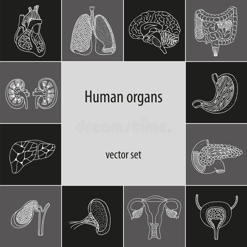 Vector set with human internal organs stock illustration