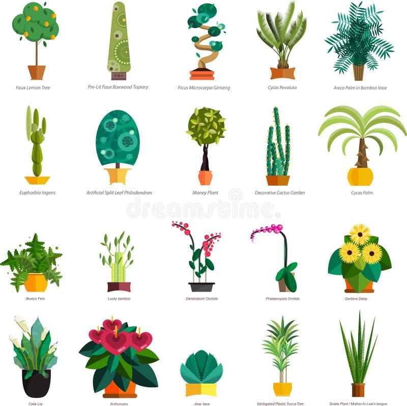 Vector Set Of Indoor Tree Home Plants In Pots. Illustration Stock ...