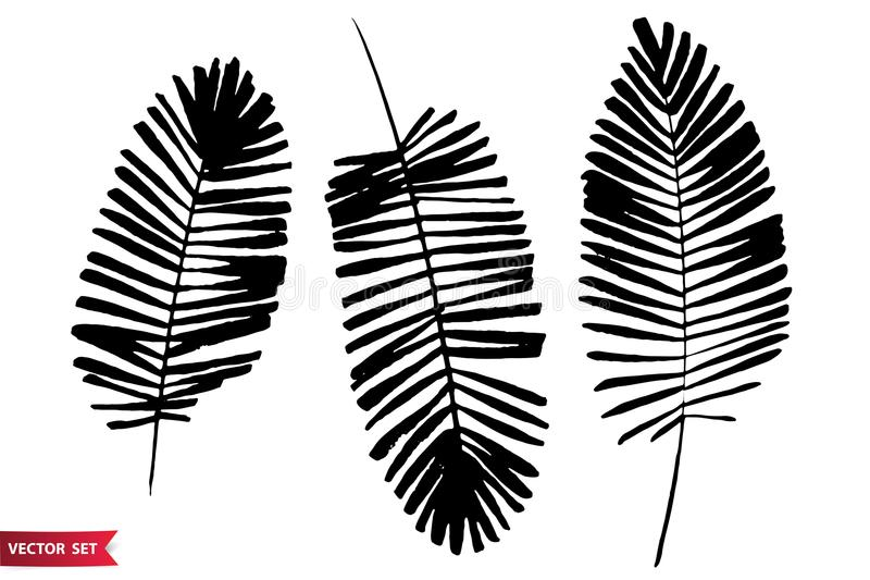 Vector set of ink drawing palm leaves, monochrome artistic botanical illustration, isolated floral elements, hand drawn. Illustration. Hand drawn botanicals set stock illustration